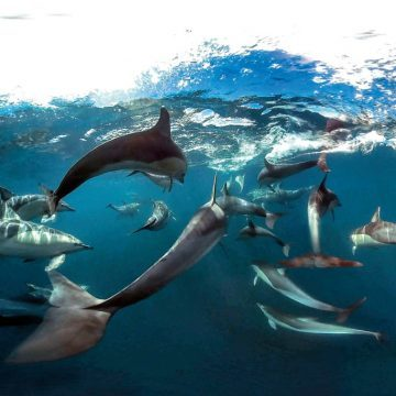 OBC SUPPORTS GULF PROTECTION