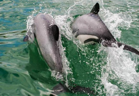 BAN SET NETS TO SAVE DOLPHINS