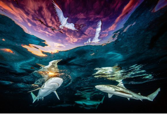 SHARKS & GULLS WINS PHOTO PRIZE