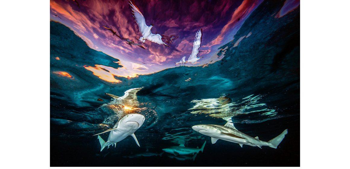 SHARKS & GULLS WINS PHOTO PRIZE
